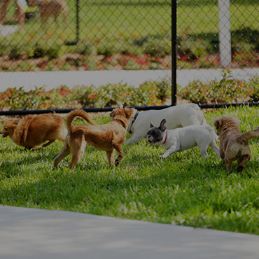 Large Dog Park at Dove Cove Apartments